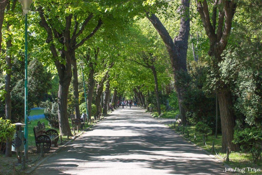 cismigiu-park