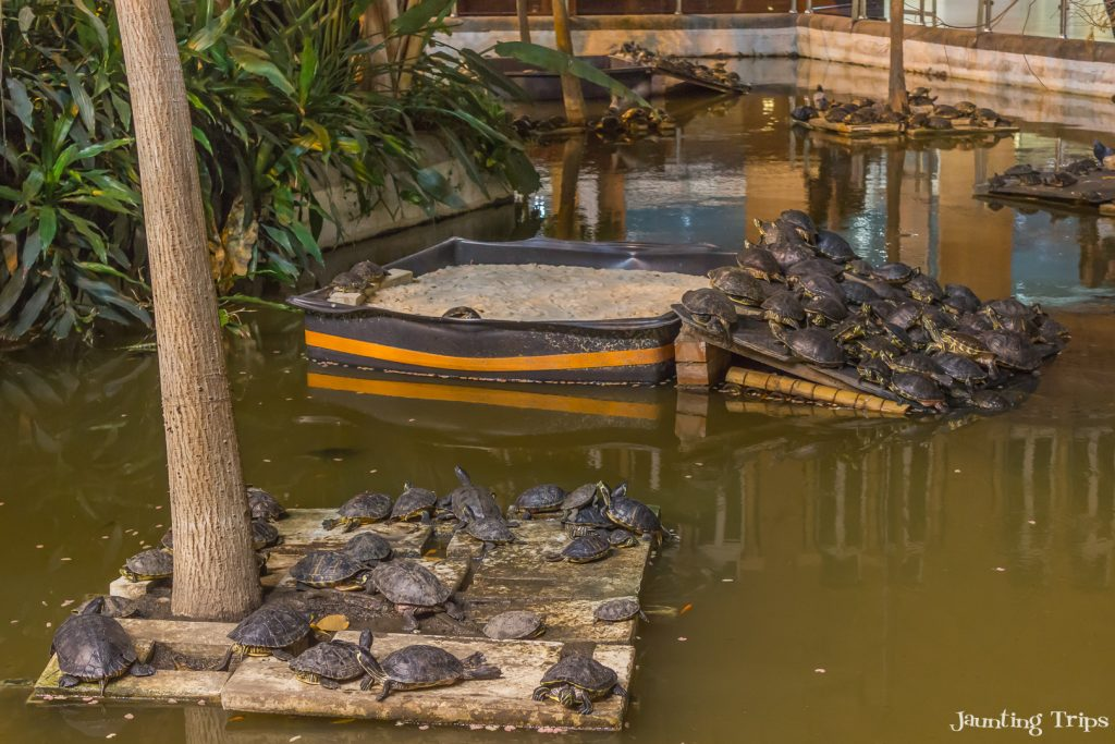 atocha-turtles