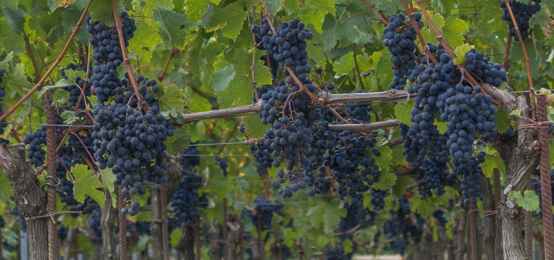 cover-bordeaux-wine-region
